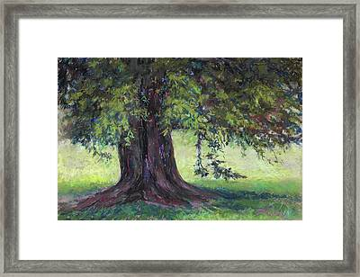 Sunshine And Shadow Framed Print by Billie Colson