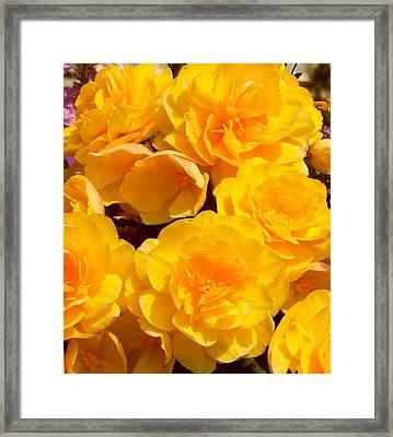 Sunshine Burst Framed Print