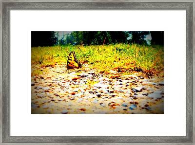 Sunshine Butterfly Framed Print