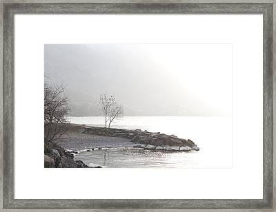 Framed Print featuring the photograph Sunshine by Colleen Williams