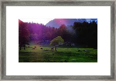 Sunshine Framed Print by Dan Sproul