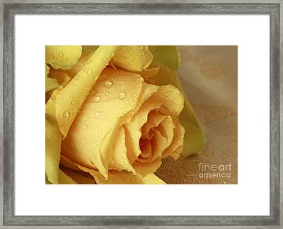 Sunshine Delight Yellow Rose Framed Print by Inspired Nature Photography Fine Art Photography