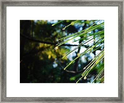 Sunshine Dewdrop Framed Print