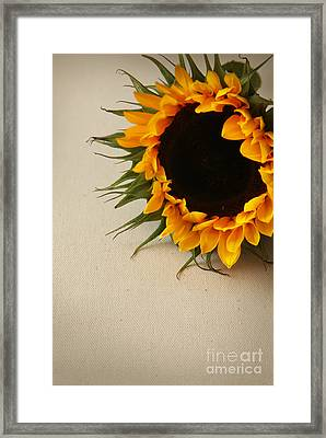 Sunshine Framed Print by Eden Baed