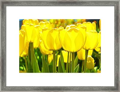 Sunshine Flower Framed Print