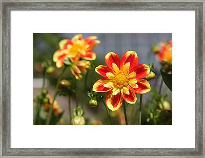 Sunshine Flower Framed Print