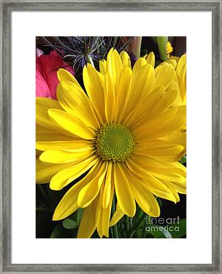 Sunshine Flower Framed Print by Susan Townsend