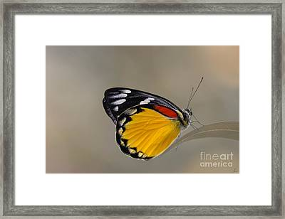 Sunshine For The Taking Framed Print