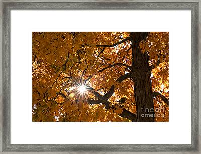 Sunshine Gold Framed Print