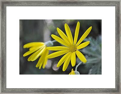 Sunshine In A Flower Framed Print