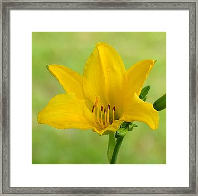Sunshine In A Flower Framed Print by Kim Pate