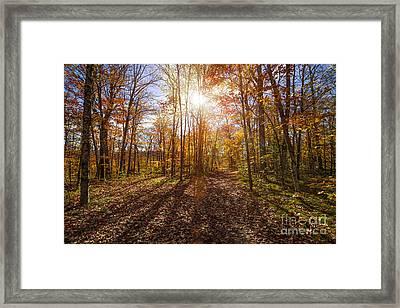 Sunshine In Fall Forest Framed Print