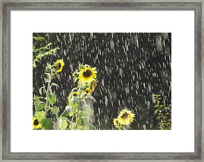 Sunshine In The Rain 2 Framed Print