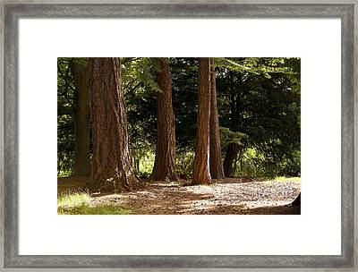 Sunshine In The Woods Framed Print by Ivy Ho