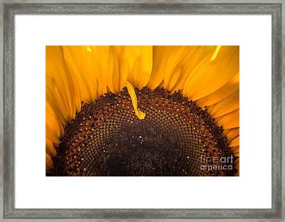 Sunshine Framed Print by Jan Bickerton
