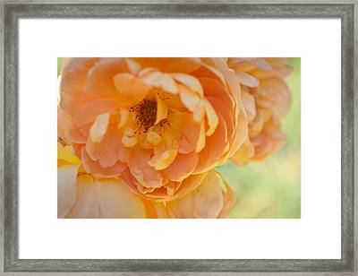 Framed Print featuring the photograph Sunshine by Julie Andel