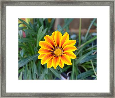 Sunshine Framed Print by Julie Cameron