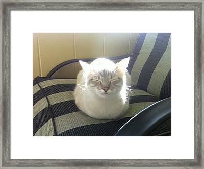 Sunshine Kitty Framed Print