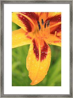 Sunshine Framed Print by Maude Demers