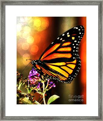 Sunshine Monarch  Framed Print by Mindy Bench