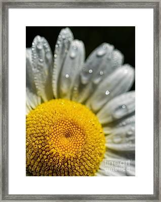 Dew On A Daisy Framed Print