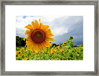 Sunshine On A Cloudy Day Framed Print by AnnaJo Vahle