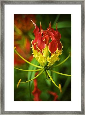 Sunshine On A Cloudy Day Framed Print by Beverly Stapleton