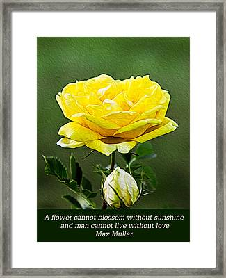Sunshine On A Yellow Rose Framed Print