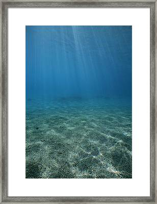 Sunshine On Dolphin Reef Framed Print by Jeff Rotman