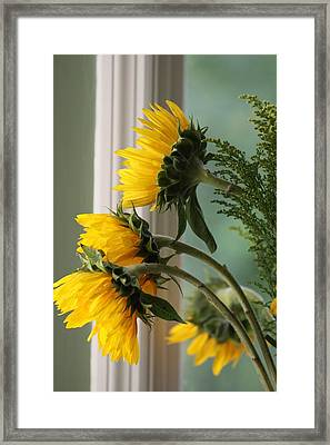 Sunshine On My Face Framed Print by Paula Rountree Bischoff