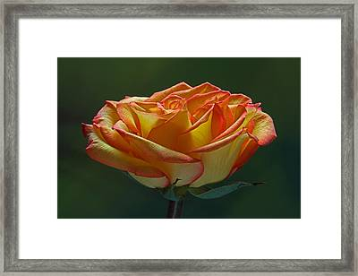 Sunshine On My Shoulders Framed Print by Juergen Roth