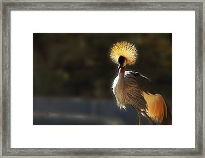 Sunshine On My Shoulders Framed Print by Music of the Heart