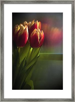 Sunshine On My Window Framed Print by Cindy Rubin