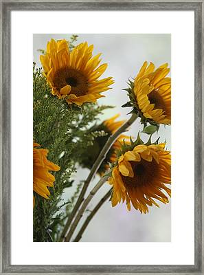 Sunshine Framed Print by Paula Rountree Bischoff