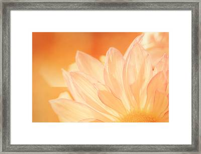 Sunshine Framed Print by Scott Norris