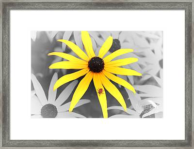 Sunshine Susie Framed Print