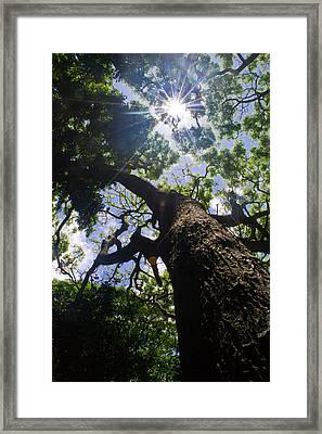 Sunshine Through The Trees Framed Print by Matt Radcliffe