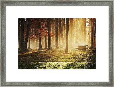 Sunshine Through The Woods Framed Print by Diana Boyd