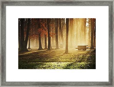 Sunshine Through The Woods Framed Print