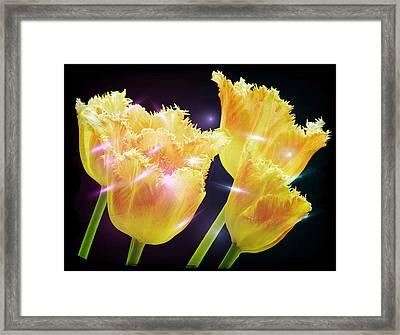 Sunshine Tulips Framed Print by Debra  Miller