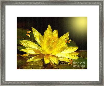 Sunshine Yellow Water Lily Framed Print