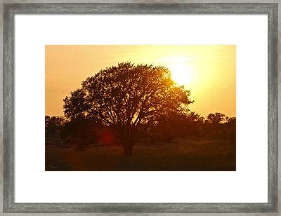 Suntree Framed Print by Teresa Dixon