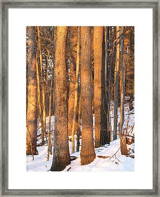 Framed Print featuring the photograph Sunwarmed In Winter by Melissa Stoudt