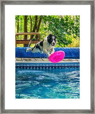 Super Dog 2 Framed Print by Steve Harrington
