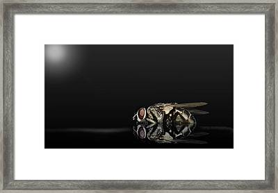 Super Flies 01 Framed Print by Kevin Chippindall