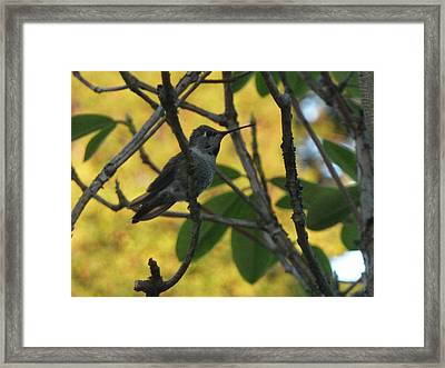 Super Hummingbird To The Rescue Framed Print