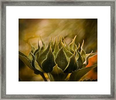 Super Sunflower Framed Print