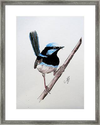 Superb Fairy Wren Framed Print