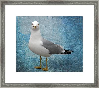 Framed Print featuring the photograph Superior Seagull by Terri Harper
