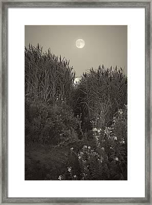 Supermoon 2014 Monochrome Framed Print